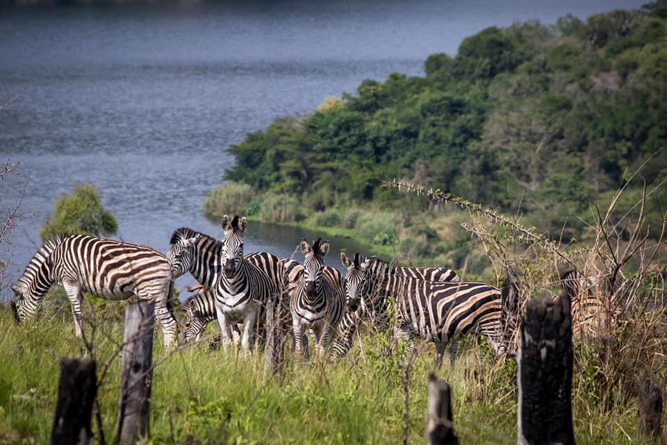 Ntshongweni Dam   Shongweni   Boredom beater   day trip   South Africa