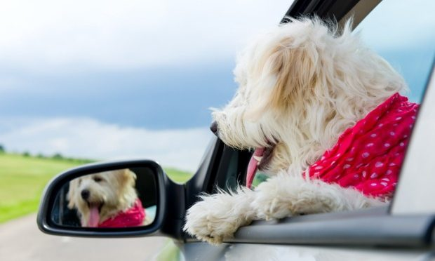 Rules of the Road when Driving with Pets_istock