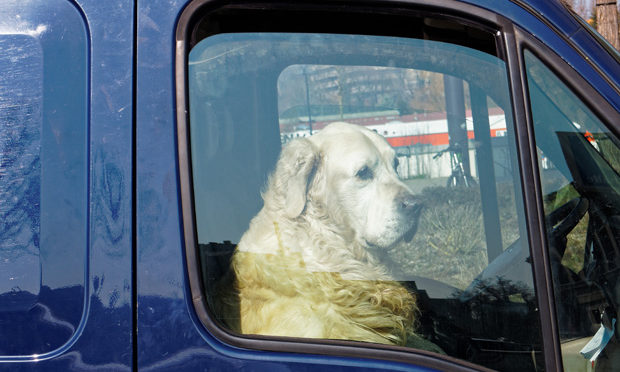 how-to-report-dogs-hot-cars_istock